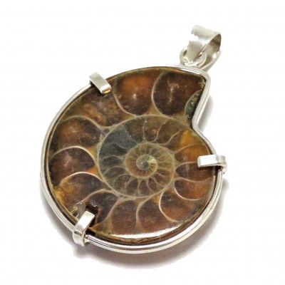 Colgante ammonites y plata 1ª ley